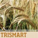 Trismart