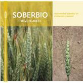 Soberbio