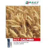 Galpino