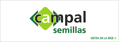 Campal Oil